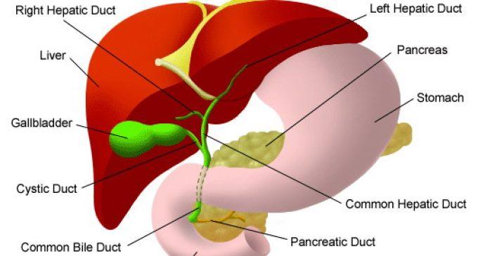 Ciroza biliara primitiva – fiziopatologie, manifestari clinice, tratament